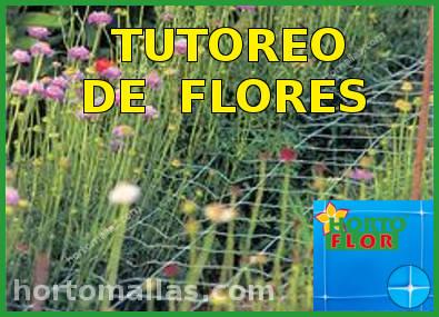 Soporte y tutoreo de flores scrog sog