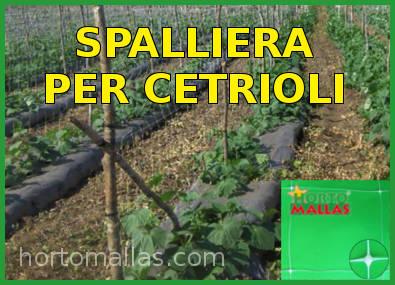 Rete spalliera per cetrioli