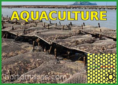 oyster bag aquaculture net