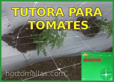 tutor malha Entutorar para o tomate