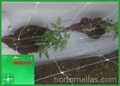 Malla para Entutoramiento de tomates