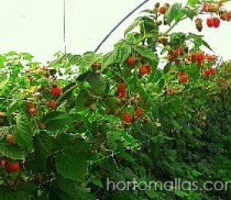 HORTOMALLAS used over berries furrows for supporting branches loaded with fruits, helps you save the expense of tutoring