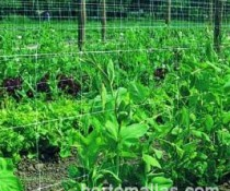 HORTOMALLAS crop-support-net-in-eggplants