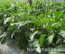 HORTOMALLAS tutoring-net-in-eggplant-substitutes-raffia