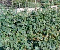 HORTOMALLAS trellis-net-with-melons