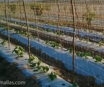 HORTOMALLAS cucumbers-using-hortomallas-as-a-vertical-crop-support-system-the-distance-among-stakes-can-be-increased-as-comparede-to-raffia-methods