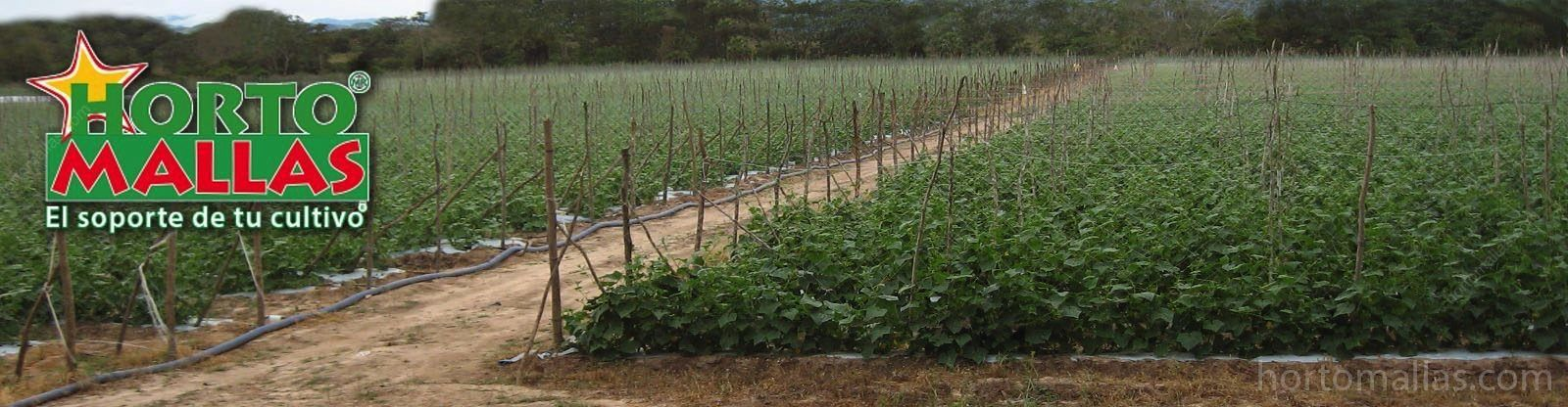 Using trellis netting you reduce the number of posts and stakes as compared to raffia