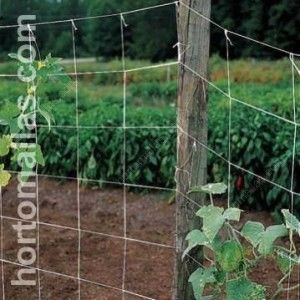 trellis net for cucumbers earlys stages of the plantation