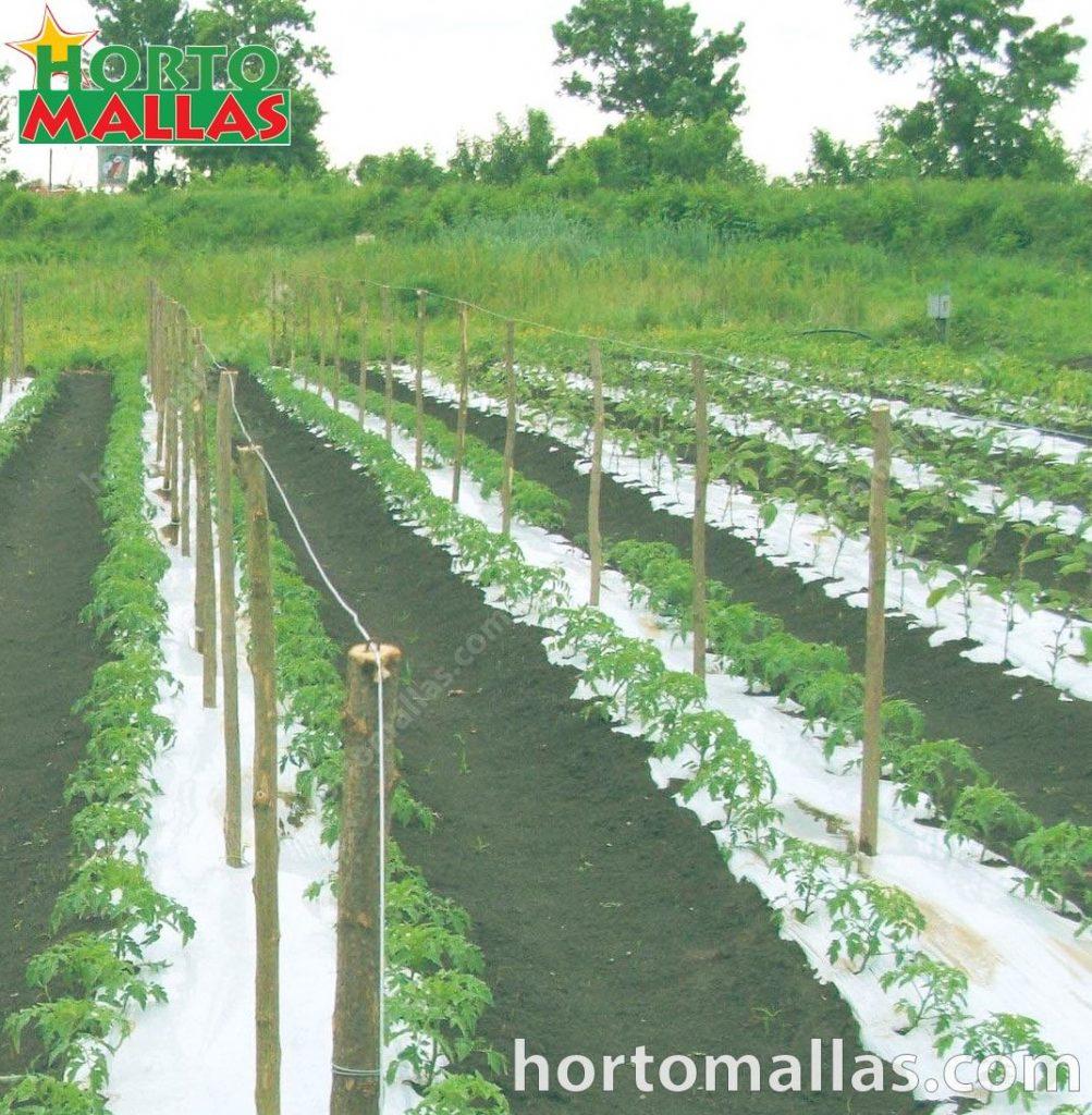 HORTOMALLAS® é a tutoragem perfeita para manter as plantas elevadas do solo e, assim, evitar doenças e danos nos frutos, aumentando a vida útil (e, portanto, a colheita) da mesma planta.