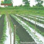 HORTOMALLAS é a tutoragem perfeita para manter as plantas elevadas do solo e, assim, evitar doenças e danos nos frutos, aumentando a vida útil (e, portanto, a colheita) da mesma planta.