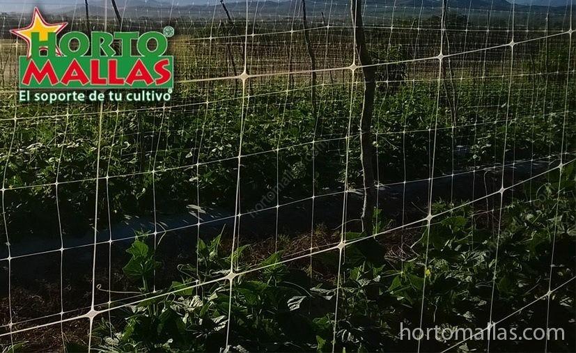 Les avantages d'un réseau pour les légumes avec une  maille grande de 25 x 25 cm pour optimiser la culture .