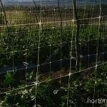 HORTOMALLAS espalderas entutorado rafia pepino pepinillo pickle soporte tutor