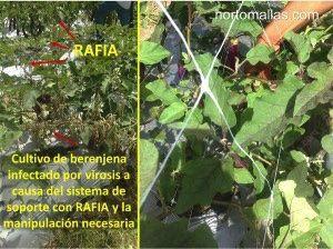 Comparación del cultivo en campo abierto con malla espaldera HORTOMALLAS