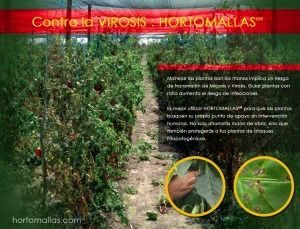 cultivo chiles