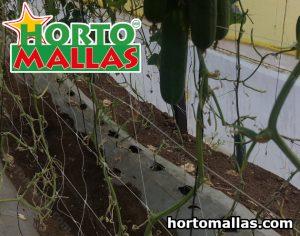 trellis net for vegetable support