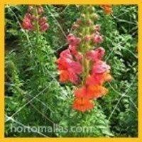 malla-tutor-de-flores