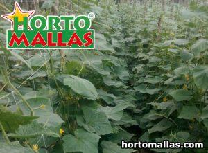 Supporti di piante vegetali
