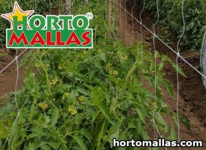 HORTOMALLAS® mesh installed in crop