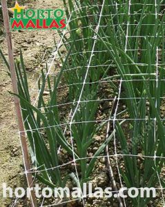 Crop netting used horizontally for flower support