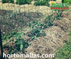 metal crop nets used to train vegetables