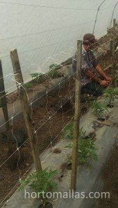 training net   with trellis