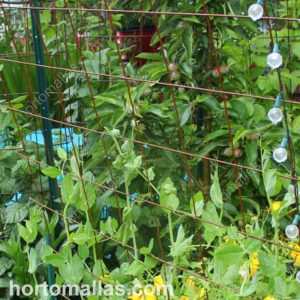 metal wire remesh used as a trellis support