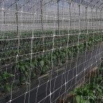 vertical crop netting