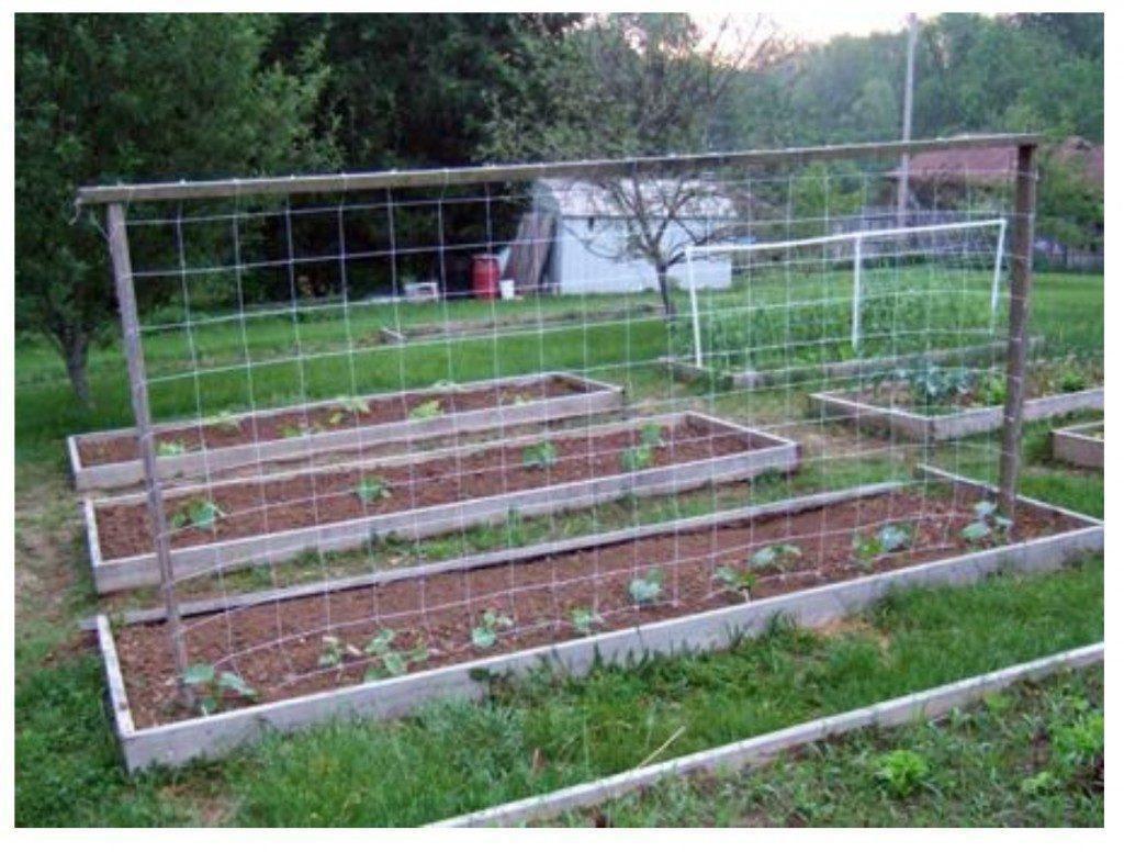 Exemplo de uma horta de quintal onde a malha/rede treliça pode ser utilizada como suporte/apoio para diferentes cultivos evitando a Botrytis.