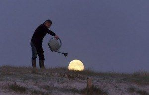 inicio tutoreo luna