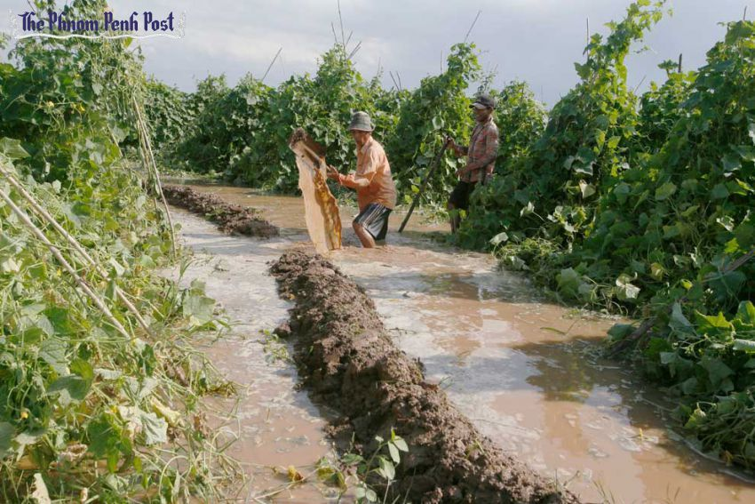 Effects of climate change on agriculture: trellising net as a preventive method against crop damage.