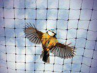 GUACAMALLAS Anti Bird Netting