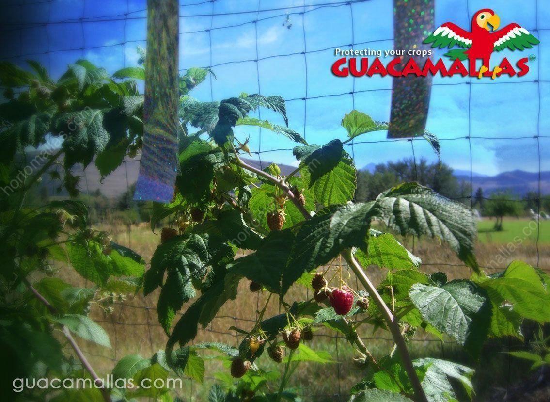 شبكة جوكامالاس لمكافحة الطيور