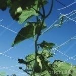 trellises vegetable support