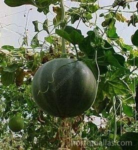 rete per meloni