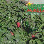 cultivo de chile con HORTOMALLAS