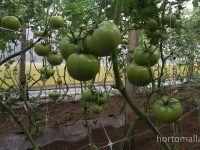 HORTOMALLAS Vegetable Support Net