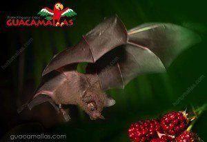 A bat at work against a berriy field