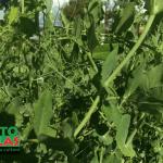 malla para hortalizas