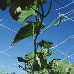 cultivo de chayote con HORTOMALLAS
