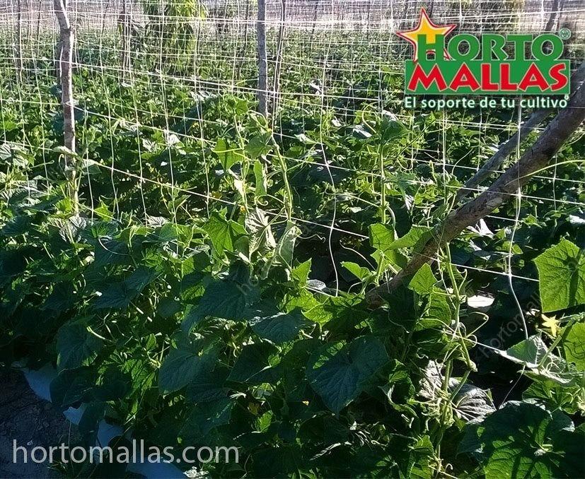Horticulture trellising system against cucumber botrytis
