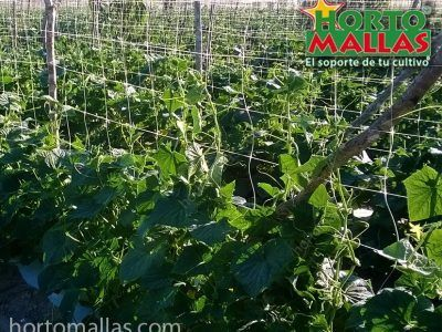 hortomallas-en-pepino-espaldera-vertical-con-acolchado-y-fertiriego-111.jpg