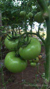 malla hortalizas