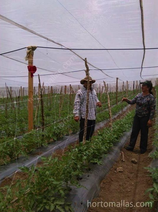 Crop Support Net: A Better Alternative To Raffia