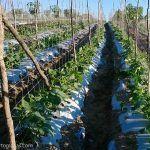 cultivação da terra
