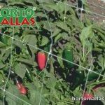 malla plastia para cultivo de Chile