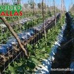 malla espaldera para cultivos hortomalla