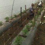 soporte de tomates