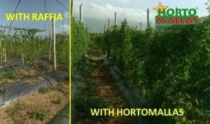 Comparison between raffia and HORTOMALLAS