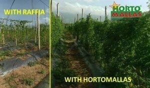 Comparison between raffia and HORTOMALLAS