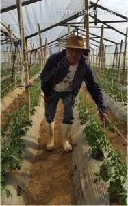 soporte de hortalizas